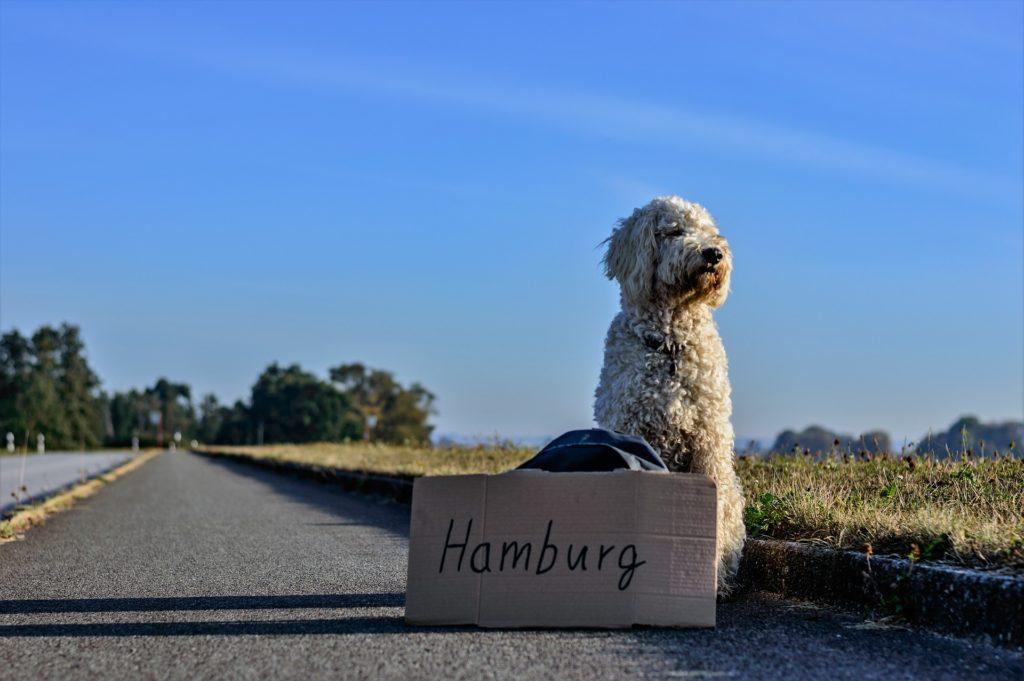 Животное путешествует за границу.